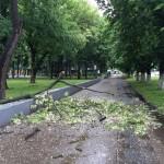 Негода зламала дерево у центрі міста