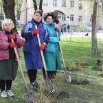 Чистий четвер у Борисполі: живопліт у парку та форзиції у сквері