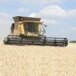 Жнива стартували: «Агро-Холдинг МС» уже намолотив 1,5 тис. тонн пшениці