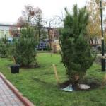 Кримські сосни з'явилися на центральній площі