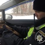 Як інспектори патрульної поліції яструба врятували