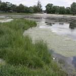 Дослідили озера Борисполя
