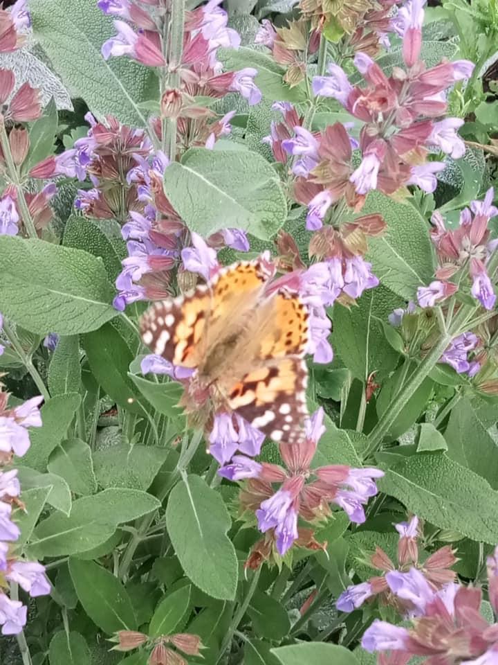 метелик бориспіль