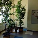 В академічному ліцеї облаштують зимовий сад