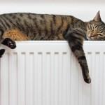 Вимоги подати тепло та погрози Зеленським: як у Борисполі опалювальний сезон починали