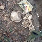 Археологи знайшли у Борисполі багато монет, прикрас і горн ХVІІ століття