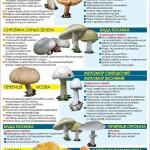 """Як відрізнити їстівні гриби від отруйних """"двійників"""""""
