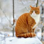 Бориспіль готується до зниження температури та опадів: прибиратимуть сніг і відкриватимуть пункти обігріву