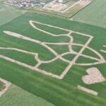 Новий рекорд аграріїв-науковців:  велетенський герб України, висіяний кукурудзою