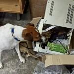 Службовий собака київських митників виявив схованку зі зброєю, приховану у музичному центрі