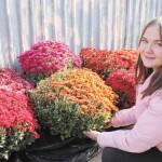 Бориспільський бал хризантем